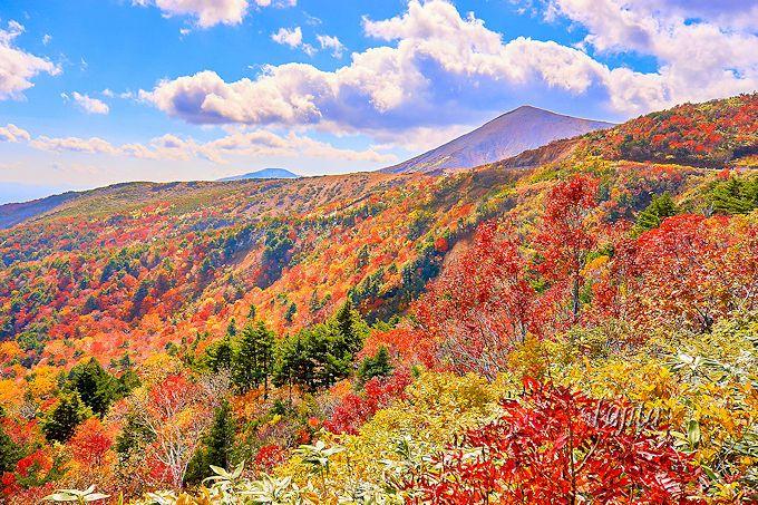 天狗の庭は山肌の紅葉が絶景!