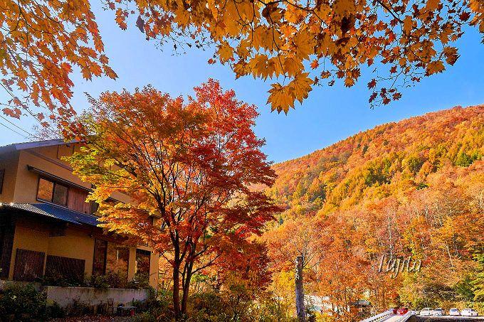 宿名通り一面の紅葉に包まれる!七味温泉紅葉館