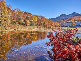 志賀高原の紅葉は蓮池が絶景!長野・一沼や琵琶池もおすすめ