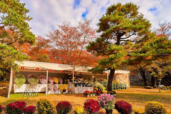 懐古園では紅葉に加えて「東信菊花展」も鑑賞しよう!