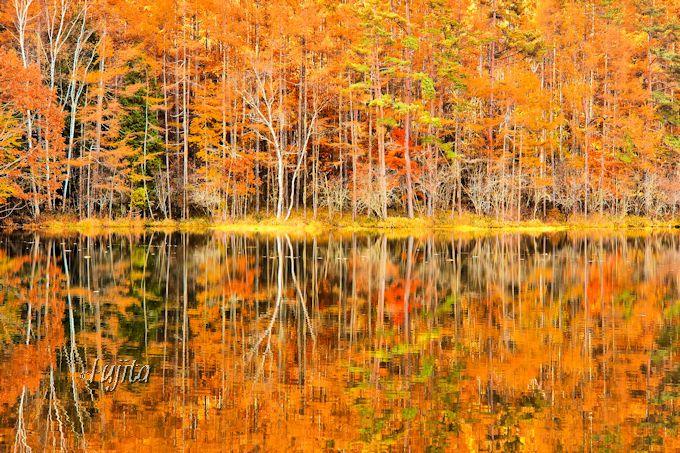 御射鹿池の紅葉が水面に映り2倍に!
