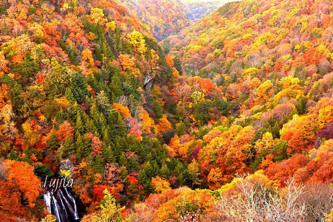 横谷渓谷の紅葉を一望!横谷観音展望台