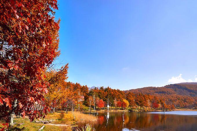 女神湖の紅葉も断然おすすめ!