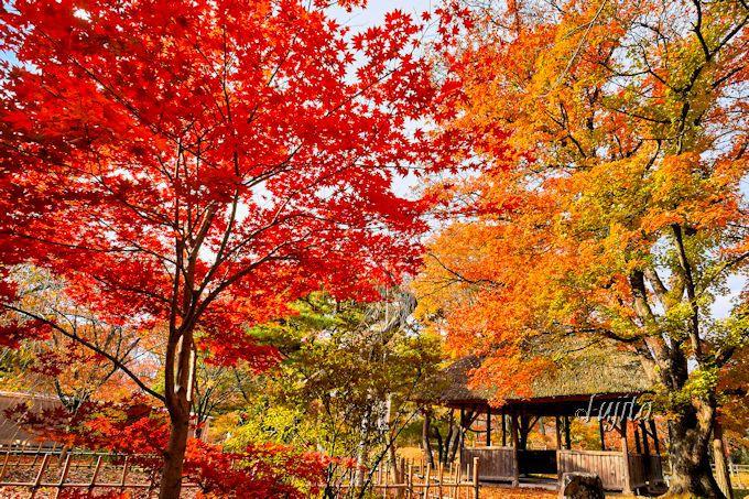 懐古園で最も美しい紅葉スポット「あずま屋」