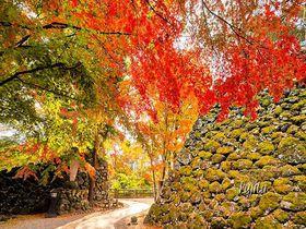 5色の紅葉が石垣に映える!信州・小諸城址「懐古園」で絶景の紅葉狩り
