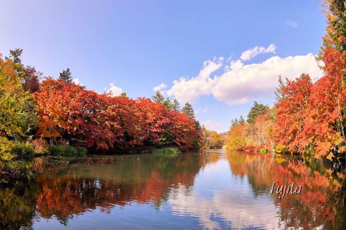 軽井沢・雲場池の紅葉は太陽に照らされ光り輝く!