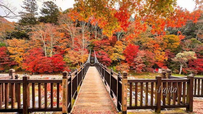 「紅の吊橋」の紅葉も凄い!