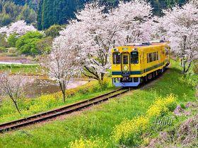 春に訪れたい千葉のおすすめ観光スポット10選 いち早く春気分!