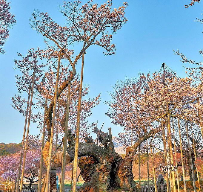 神代桜のパワーを実相寺でお裾分けして貰おう!