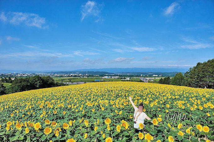 SNS映え抜群!500万本のひまわり畑で「いいね!」が貰える写真撮影〜北海道名寄市〜