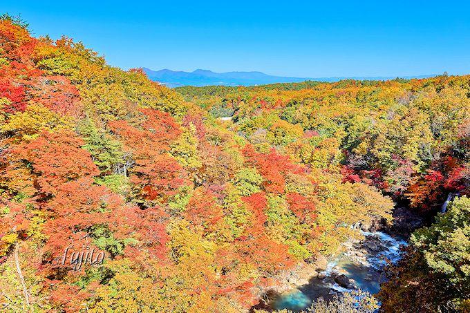 松川渓谷の紅葉第2位!「森の大橋」の上から紅葉狩り