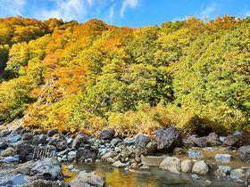 秋山郷の紅葉が見頃!切明温泉の河原で露天風呂から紅葉狩り