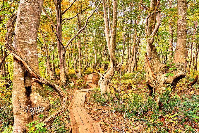 奇形巨木群が擬人化?目を疑う幻想的な光景!