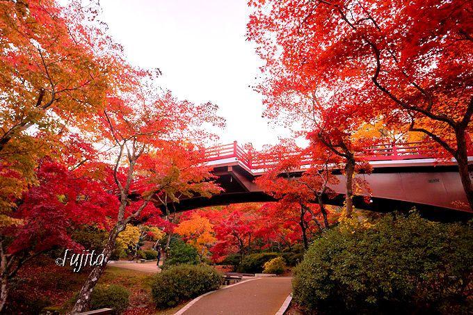 弥彦公園の紅葉は観月橋周辺に集中!