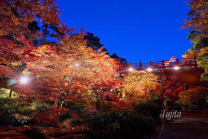弥彦公園の紅葉ライトアップ!