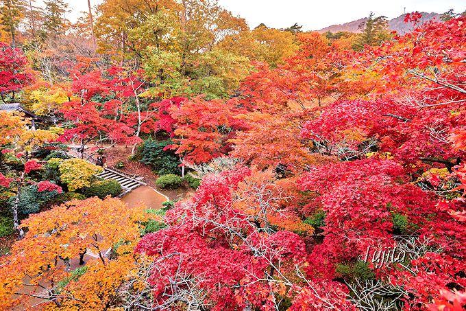 弥彦公園の紅葉はインスタ映え抜群!
