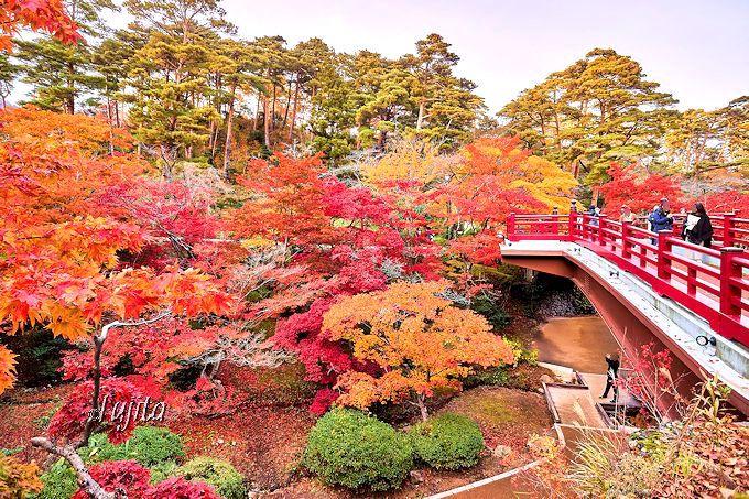 観月橋から紅葉を一望!