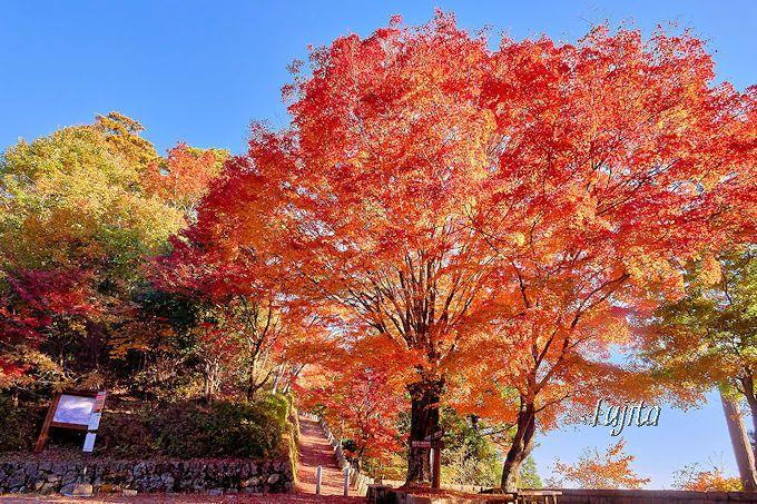 吉野山「高城山展望台」入口の紅葉