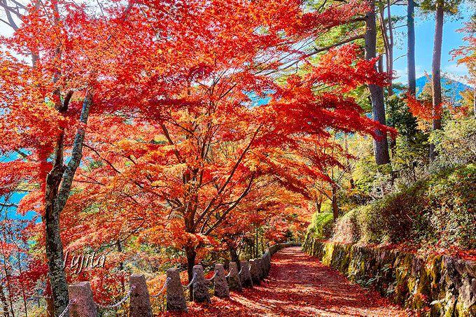 奈良・吉野山の紅葉が絶景!奥千本・高城山展望台で紅葉狩り