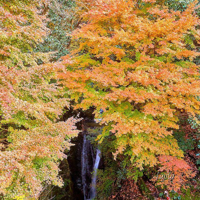 「地蔵堂の滝」の紅葉は12月中旬まで見頃!