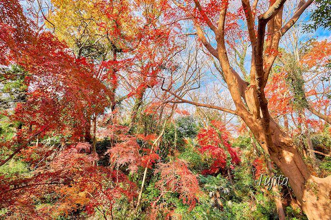 紅葉が一番絶景!四阿北西の空堀