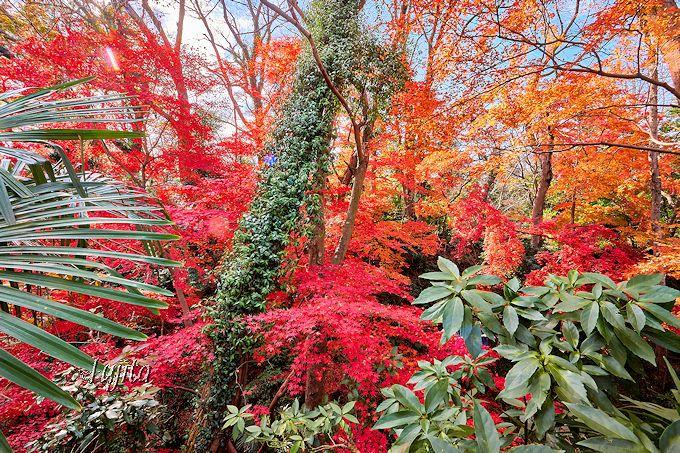 角櫓跡の空堀も紅葉が絶景!