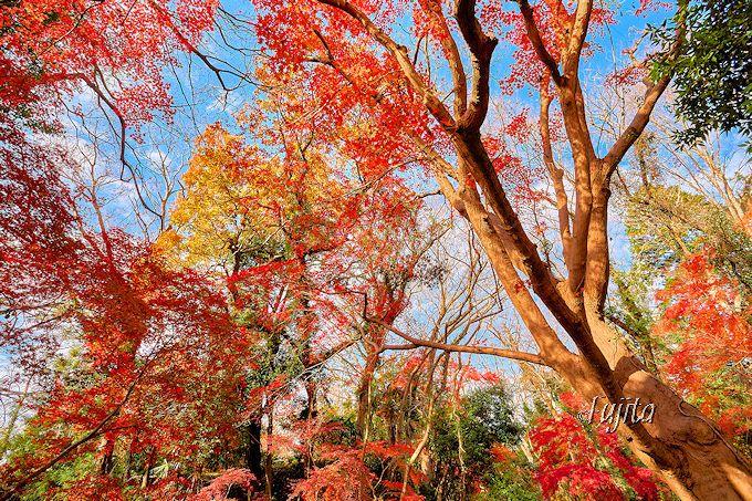 佐倉城址公園の紅葉は12月が見頃!千葉の穴場で紅葉狩り