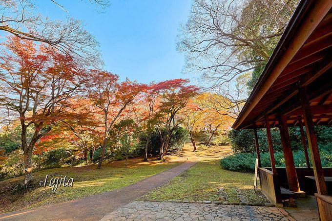 佐倉城址公園の紅葉は四阿前に注目!