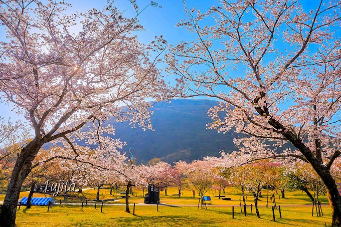 さくらの里は伊豆高原の花見名所!夜桜ライトアップも必見 | 静岡県 ...