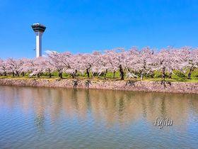 函館のおすすめ桜スポット8選 美しい春の港町でお花見を!