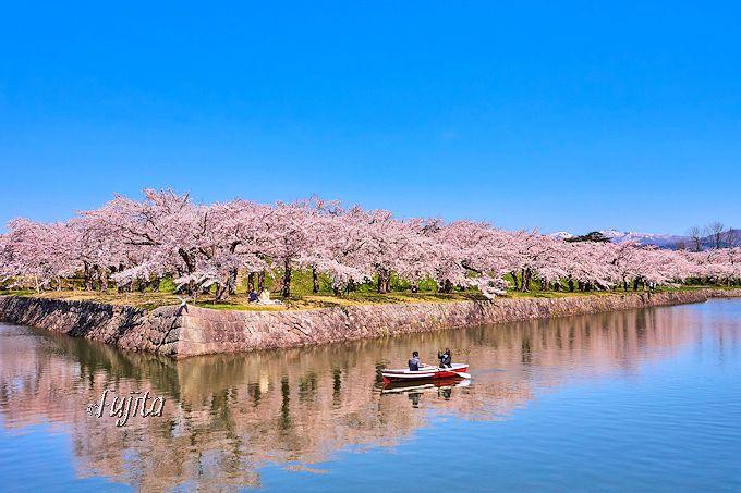 お堀の水鏡に写る桜も名物!