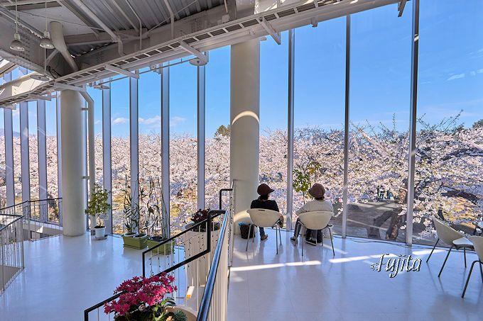 五稜郭タワーから見下ろす桜も必見!
