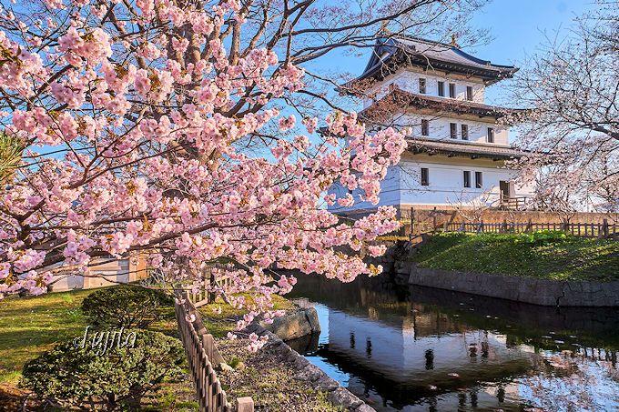 松前城と桜のコラボは必見!