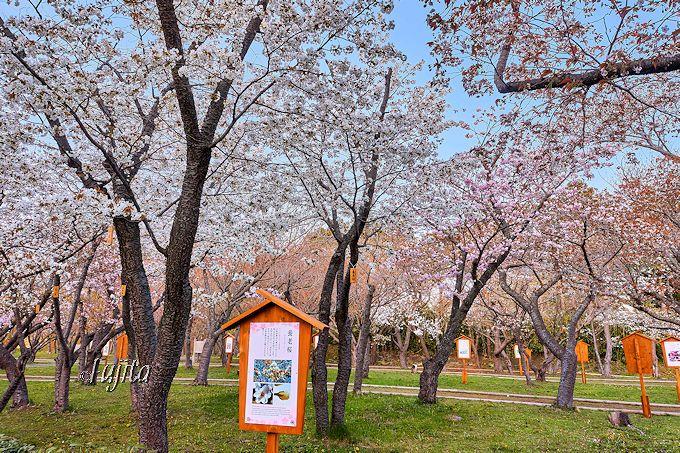 桜資料館や見本園も大充実!