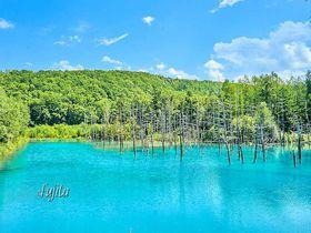 美瑛「白金青い池」おすすめ時間帯は午後一番!夏も紅葉も絶景