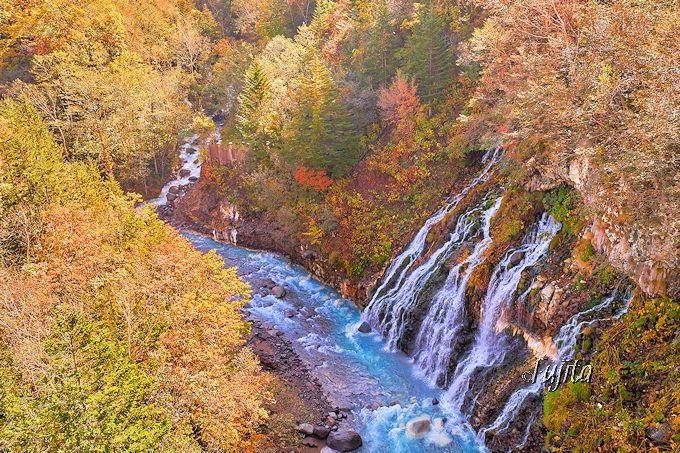 白ひげの滝の紅葉も見よう!望岳台も近い