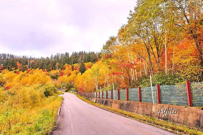 凌雲閣まで美しい紅葉が連続!