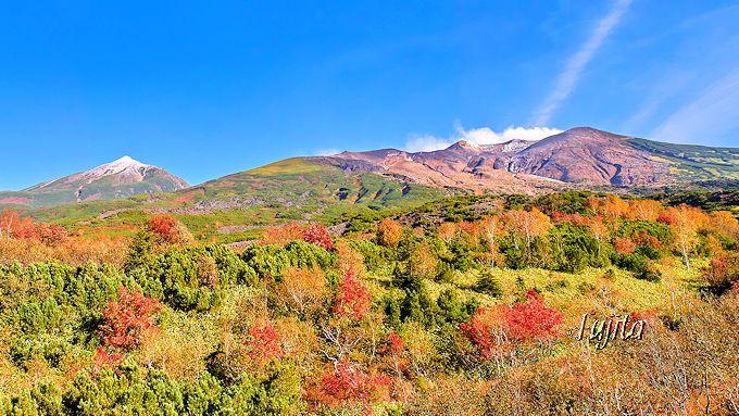 美瑛の青い池や望岳台でも紅葉狩り!
