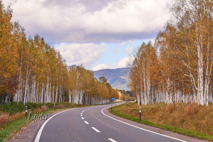 「オッパイ山」はアイヌの聖地!十勝三股の白樺林が紅葉