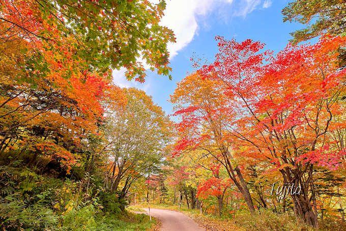 北海道屈指の紅葉!「層雲峡」(北海道)