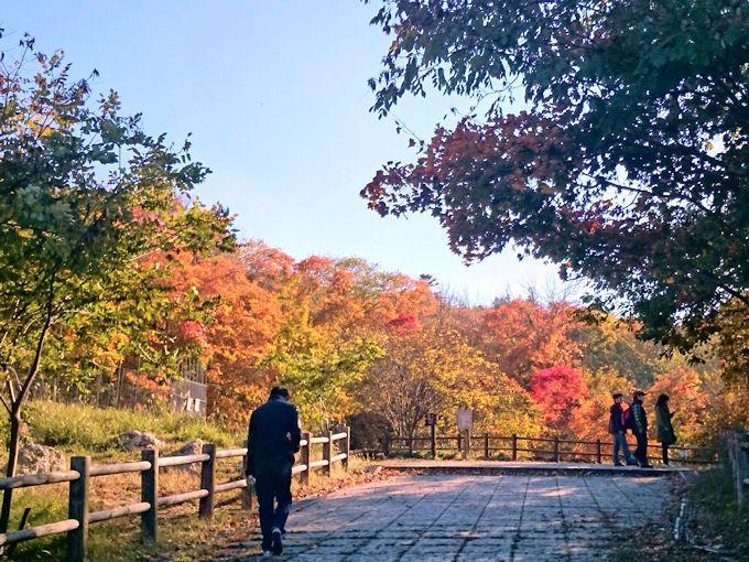 阿寒湖自然探勝路(ボッケ遊歩道)の紅葉も必見!