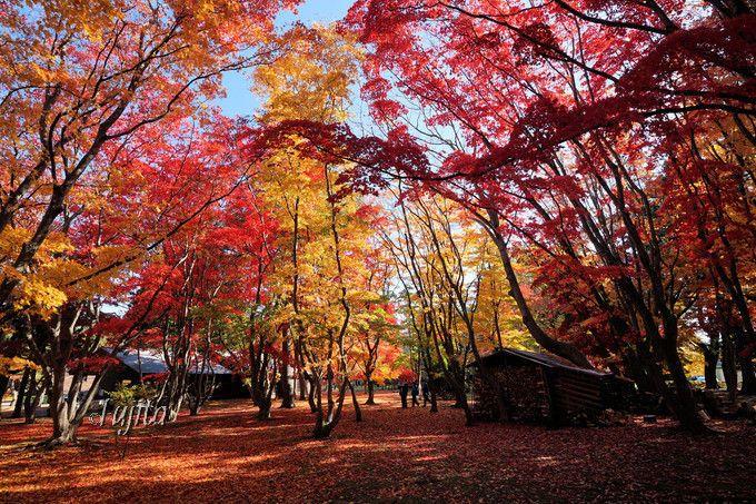 北海道の名勝庭園「香雪園」の紅葉!第1位