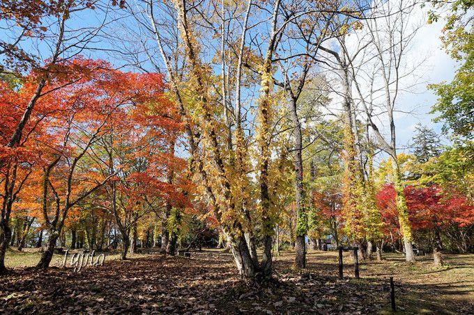 北海道で紅葉狩り!見頃時期が遅いおすすめ紅葉名所ベスト5