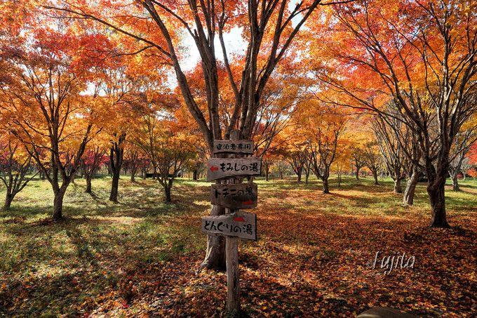 銀婚湯は紅葉が凄い温泉宿!