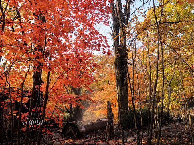貸切露天風呂の紅葉が凄い!銀婚湯で紅葉狩り〜北海道・上の湯温泉〜
