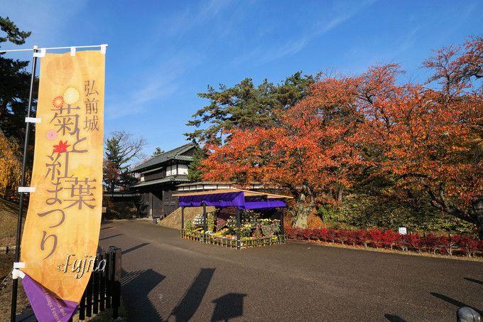 弘前城植物園では「菊と紅葉まつり」を開催