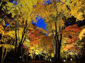 香雪園の紅葉ライトアップが絶景!北海道・函館で紅葉狩り
