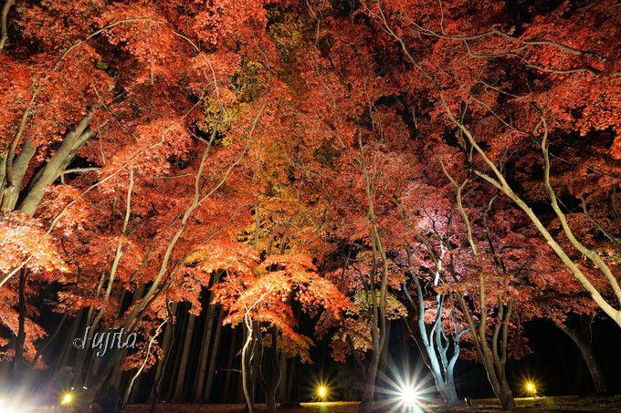 10.香雪園(函館市)