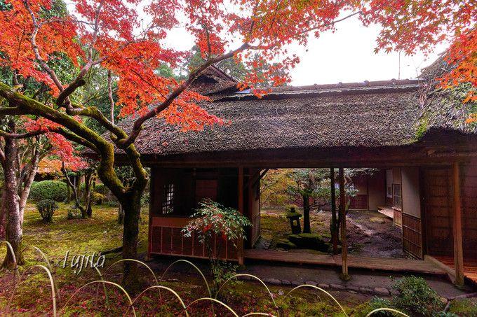 紅葉と伝統建築のコラボが美しい