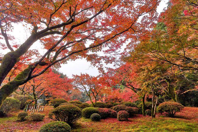 別荘前の紅葉が一番の絶景!